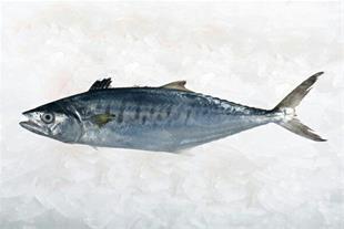 فروش و ارسال انواع ماهی تازه