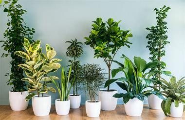 فروش انواع گیاهان آپارتمانی - 1