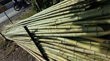 فروش چوب بامبو ( چوب نی خیزران ) - 1