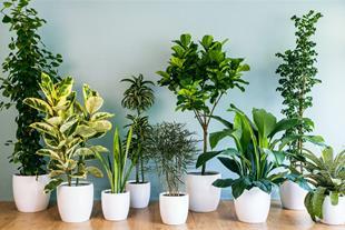 فروش انواع گیاهان آپارتمانی
