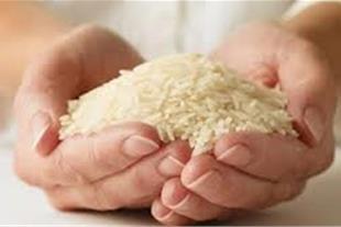 برنج درجه یک هاشمی گیلان