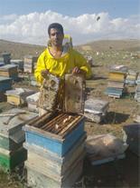 فروش عسل کاملا طبیعی و دارویی