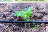 طراحی و اجرا سیستم آبیاری قطره ای