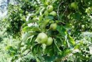 فروش باغ سیب