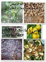 تولید -تهیه وتوزیع انواع بذر ونهال مثمر وغیر مثمر