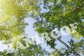 سقف کاذب کششی - باریسول جدید