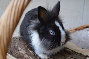فروش انواع خرگوش و حیوانات در اراک