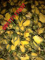 فروش  گل مینا و ساناز و الیزابت
