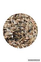 فروش عمده انواع بذر چمن