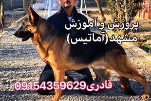 پروش،فروش و آموزش سگ مشهد(آماتیس)