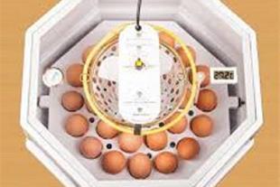 دستگاه جوجه کشی با ظرفیت 30عدد تخم مرغ