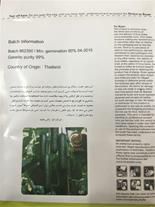 بذر خیار گلخانه ای ناگین (ناگن) Nagen