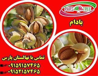 فروش نهال بادام پوست کاغذی - بادام فرانیس - 1