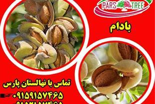 فروش نهال بادام پوست کاغذی - بادام فرانیس