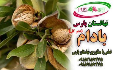 خرید درخت میوه بادام دیرگل مقاوم به سرما - 1