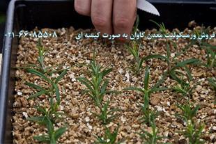 فروش ورمیکولیت کشاورزی معدن کاوان برای گل کاری
