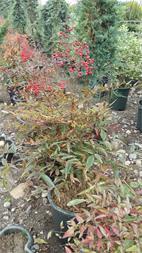 پرورش و فروش عمده گل و گیاه فضای باز(گل بیرونی) - 1