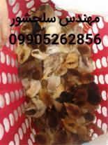 فروش جوجه مرغ محلی و دورگ مهندس سلحشور09905262856