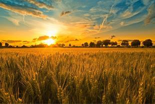3هکتار زمین کشاورزی پشت جهاد کشاورزی کردکوی