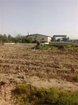 مزرعه پرورش شتر مرغ و زمین زراعى