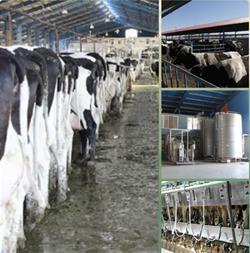فروش کود دامی و حیوانی - فروش شیر و گوشت - 1