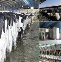 فروش کود دامی و حیوانی - فروش شیر و گوشت