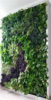 ساخت دیوار سبز برای اماکن عمومی و خصوصی در مشهد