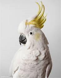 پرفروش ترین گونه های طوطی - 1