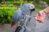 فروش تضمینی تخم های نطفه دار طوطی سخنگو