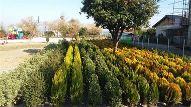 فروش گلهای فضا باز و فروش درخت جنگلی شمال کشور - 1