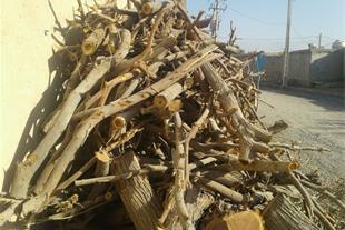 فروش چوب اوکالیپتوس و شوک