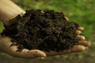 کود برگ گلخانه ای ارگانیک