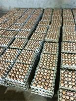 فروش تخم مرغ محلی