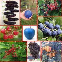 فروش نهال میوه خاص(وارداتی) و معمولی