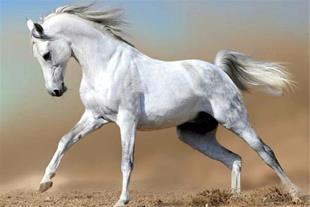 نیاز به شریک در زمینه اصطبل اسب