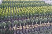 فروش گیاهان بیرونی (گل و گیاه فضای باز)