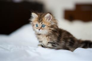 تخفیف پانسیون گربه