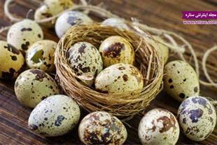 فروش تخم نطفه دار برای جوجه کشی