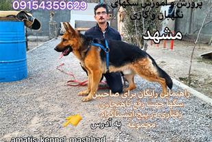 آموزش و فروش سگ در مشهد،راهنمایی آموزشی رایگان