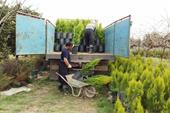 تولیدی گل و گیاه گلکده شمال