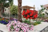 فروش گل و گیاه برای طراحی فضای سبز حیاط ویلا