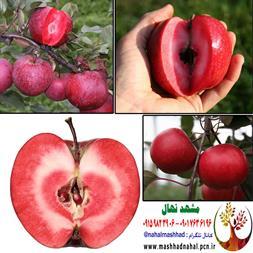فروش نهال سیب توسرخ - 1