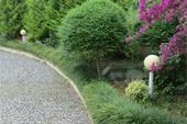گل و گیاه مناسب برای حیاط ویلا