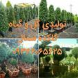 خرید گل و گیاه ارزان به قیمت تولید