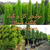 فروش ویژه گل و گیاه , درختچه , درخت