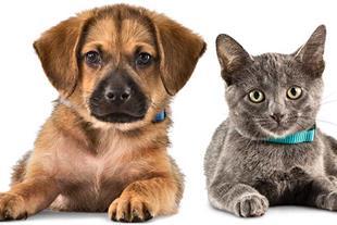 اورژانس حیوانات خانگی