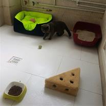 پانسیون و نگهداری گربه و خریدار انواع پرشین کت