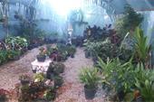 فروش گل های خانگی و باغچه ، نهال و درختچه و گلدان