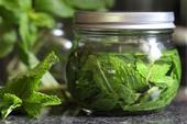 عرق گیری انواع گیاهان دارویی