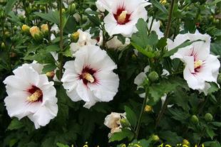 فروش انواع گل و گیاه فضای باز